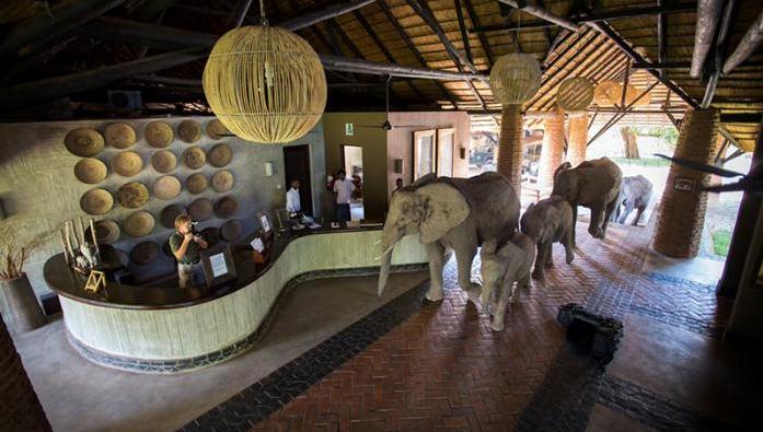 elefantes en la recepcion 4