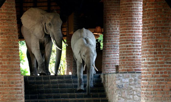 elefantes en la recepcion 5