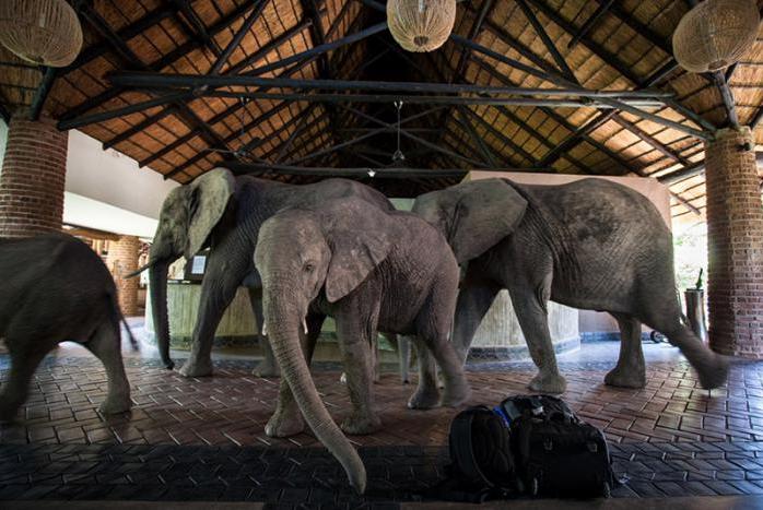 elefantes en la recepcion 6