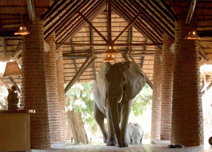 elefantes en la recepcion 7