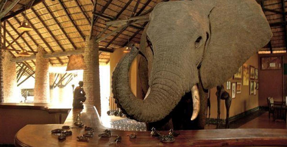 elefantes que se pasean por la recepcion de un hotel