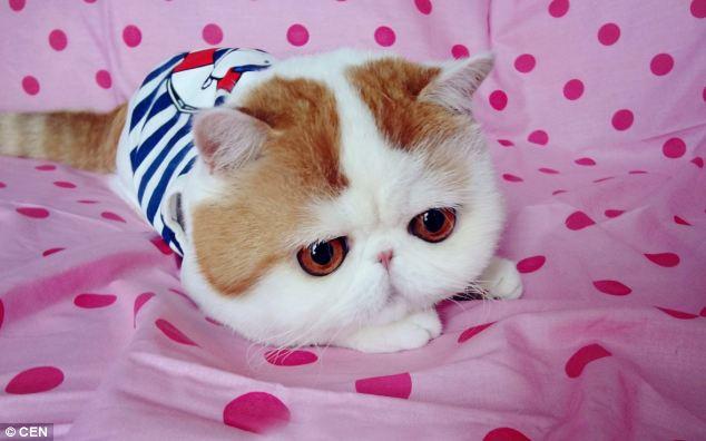 gato adorable 1