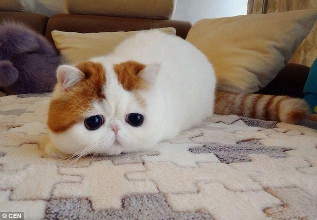 gato adorable 10