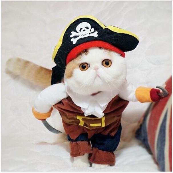 gato adorable 11