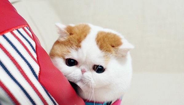 gato adorable 12