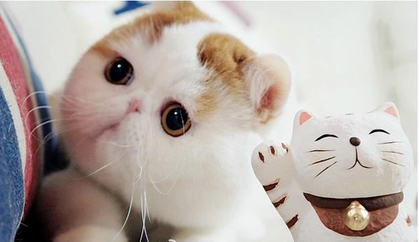gato adorable 13