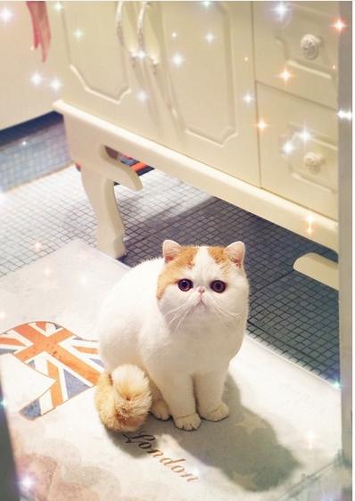 gato adorable 16