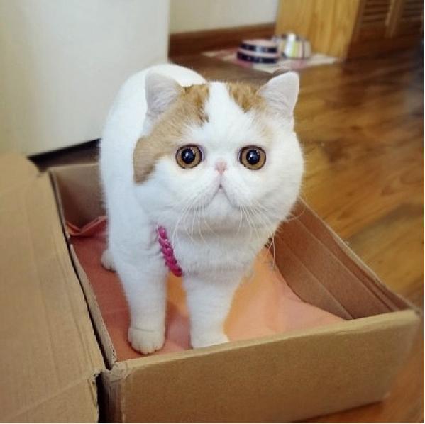 gato adorable 17