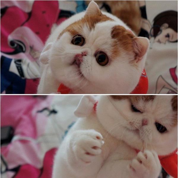 gato adorable 18