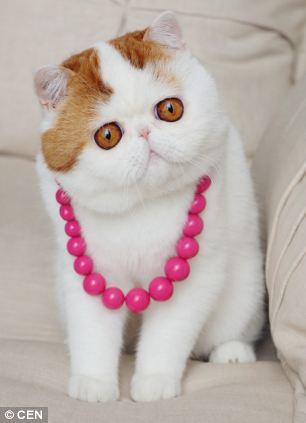 gato adorable 2