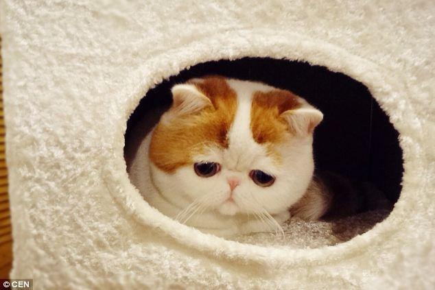 gato adorable 3