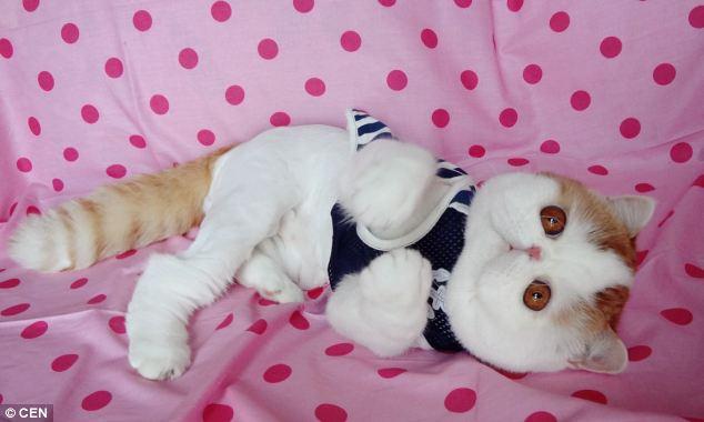 gato adorable 4