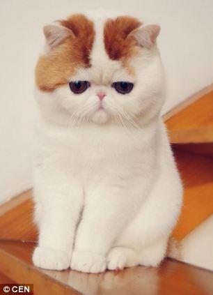 gato adorable 5