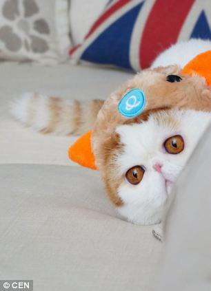 gato adorable 6