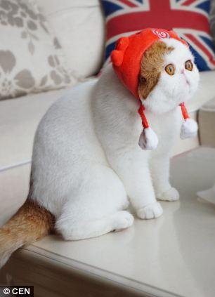 gato adorable 7