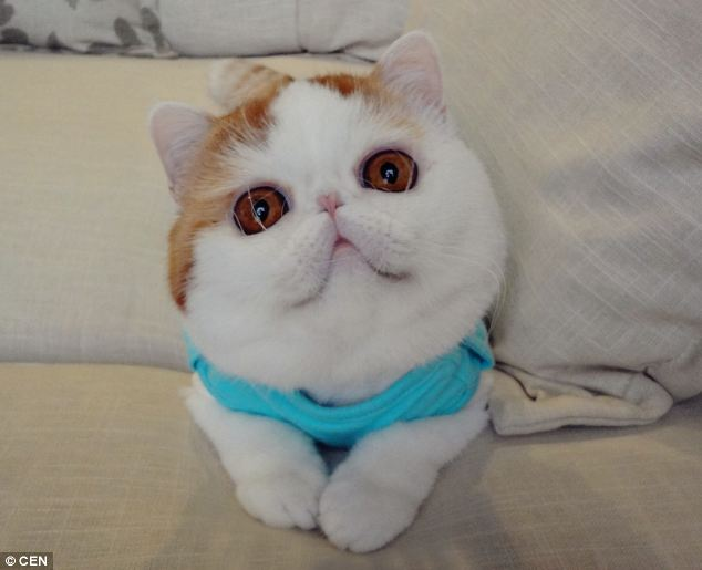 gato adorable 8
