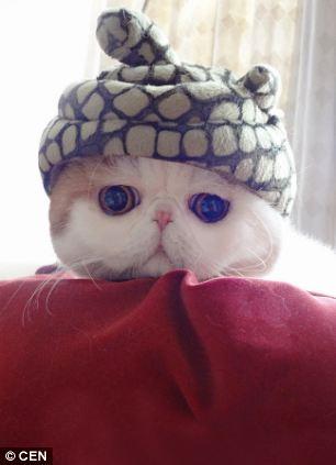 gato adorable 9