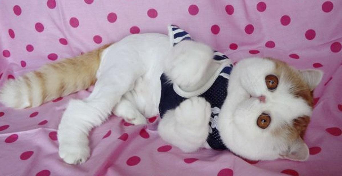 gato-adorable