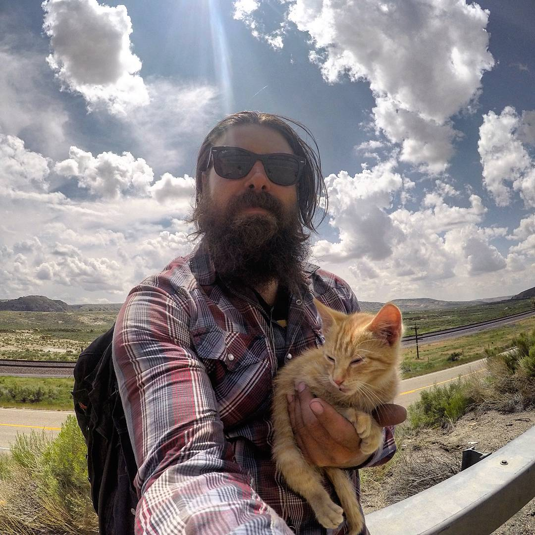 gato motorista 4