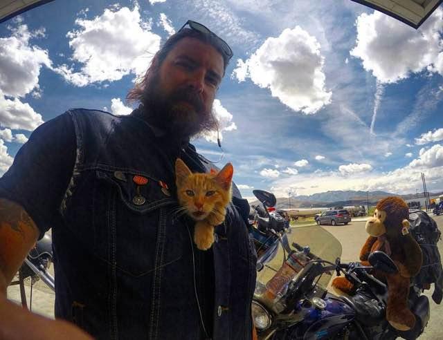 gato motorista 6