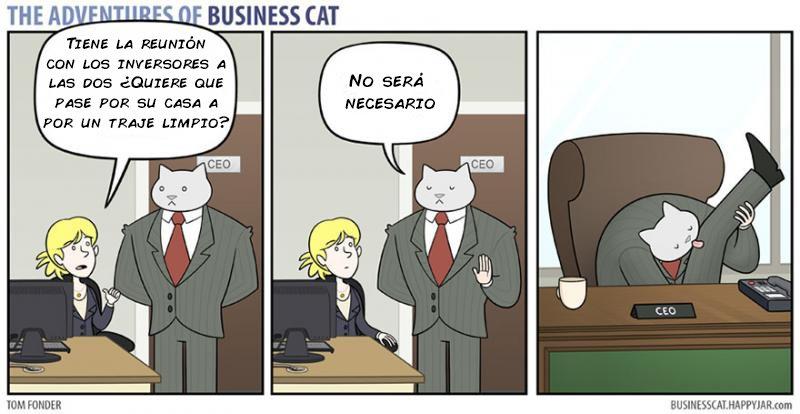 las aventuras de un gato jefe