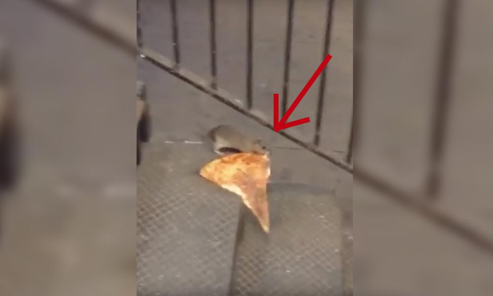 rata_pizza_portada