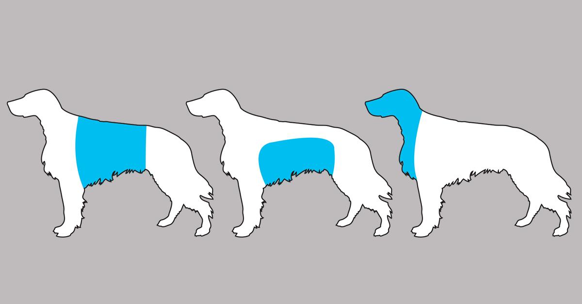 sintomas_perro_portada_1