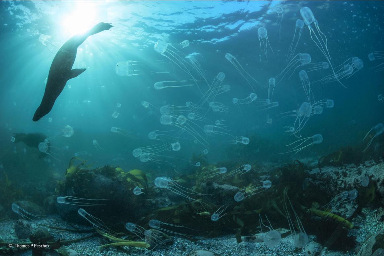 Bajo el agua fotos 5
