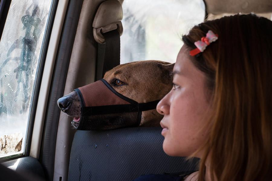 adopta perros sin control 10