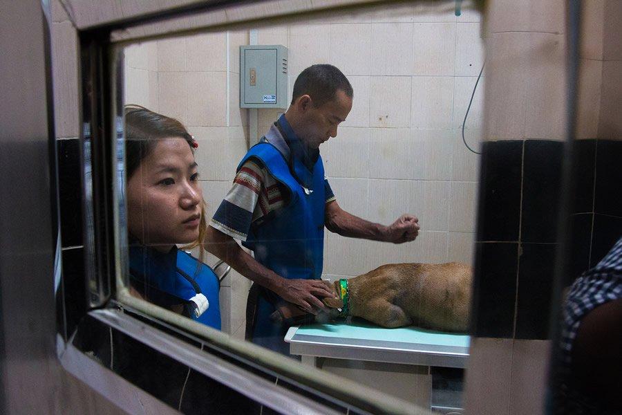 adopta perros sin control 12