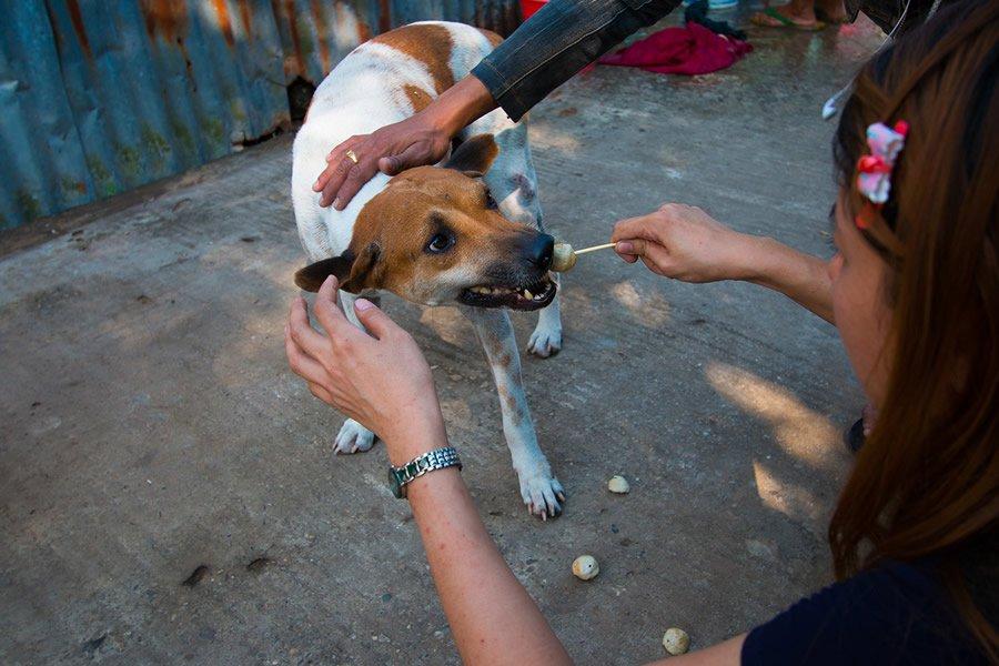 adopta perros sin control 7