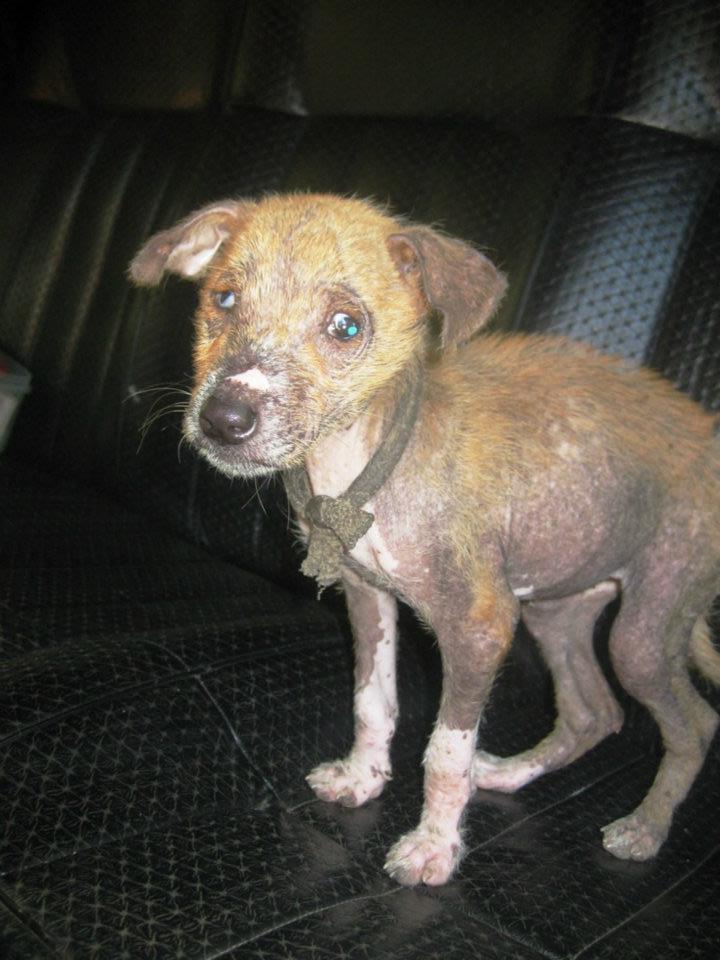antes y despues de perros rescatados 1