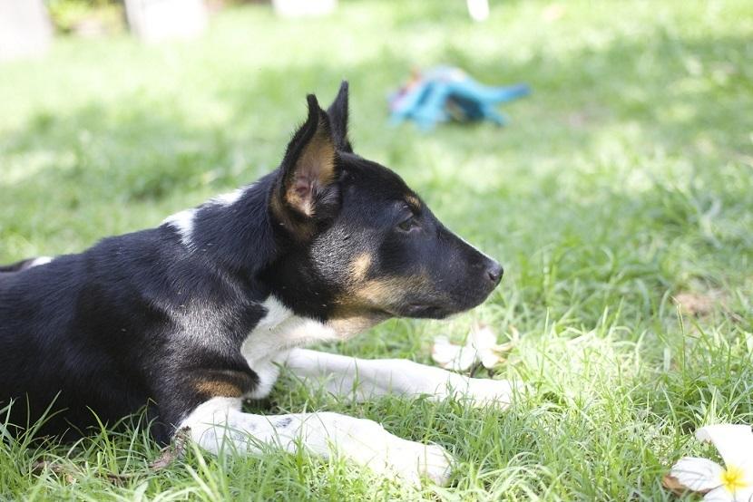 antes y después de perros rescatados 10