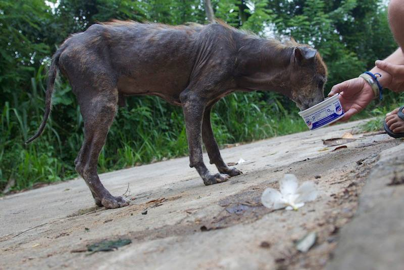 antes y después de perros rescatados 3