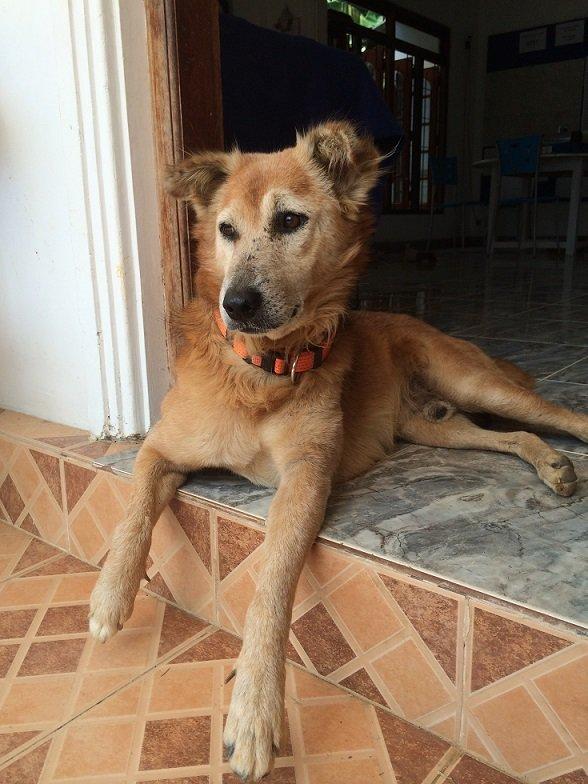 antes y después de perros rescatados 4