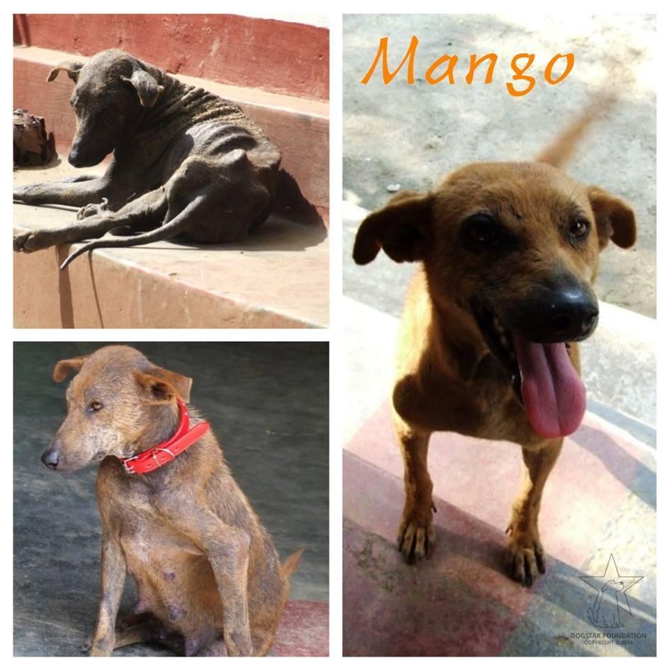 antes y después de perros rescatados 5
