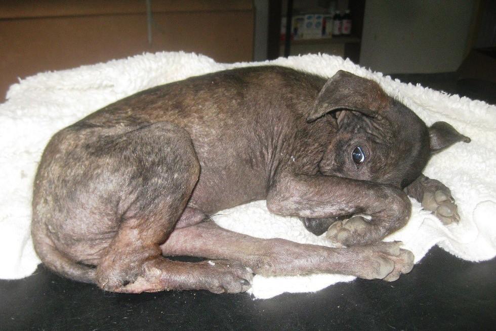 antes y después de perros rescatados 6