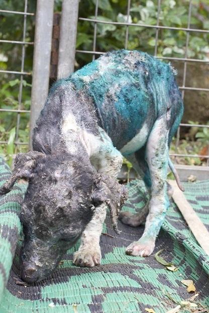 antes y después de perros rescatados 8