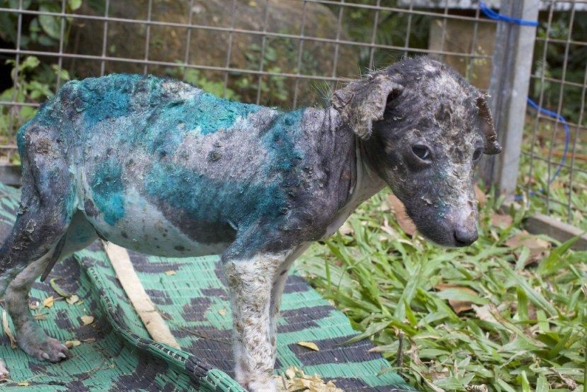 antes y después de perros rescatados 9