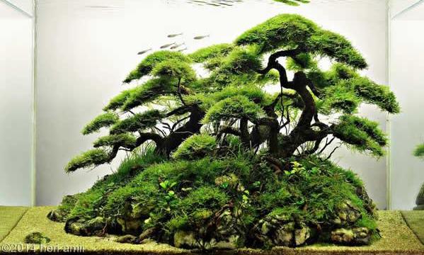 aquascaping de takashi amano el artista de la decoracion de acuarios 3