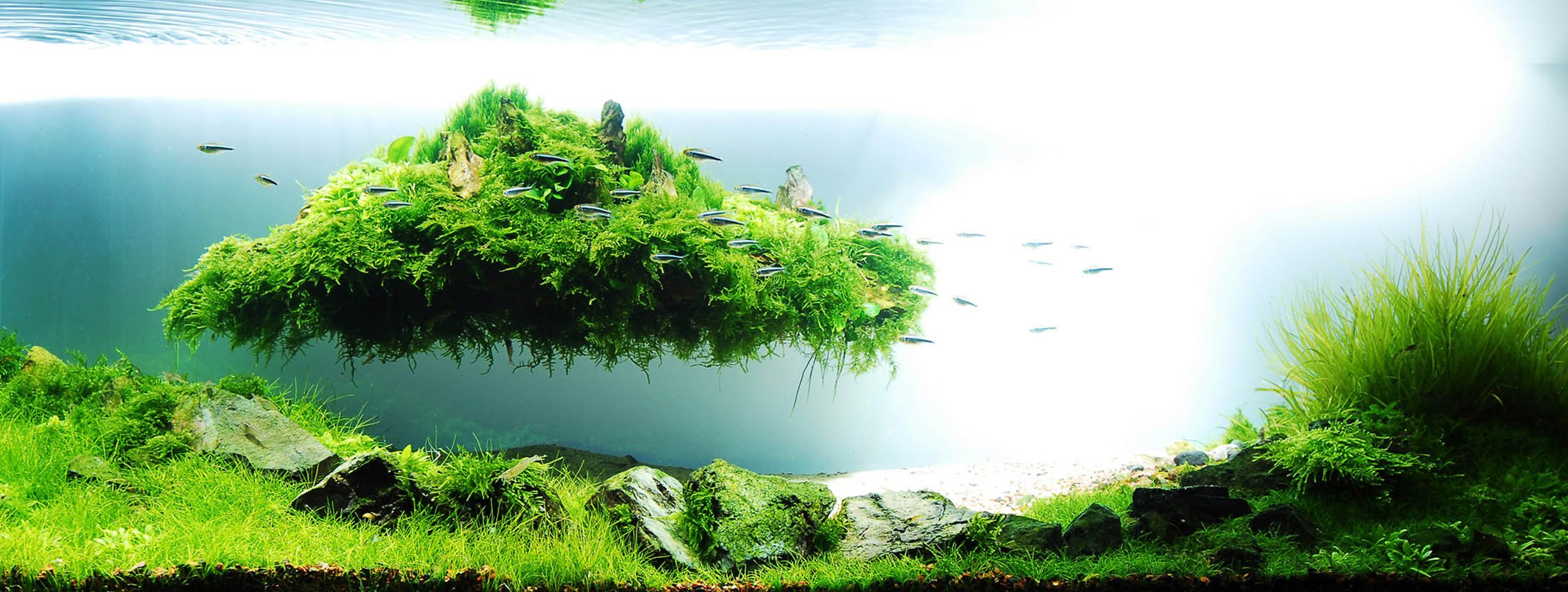aquascaping de takashi amano el artista de la decoracion de acuarios 4