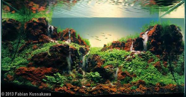 aquascaping de takashi amano el artista de la decoracion de acuarios 5