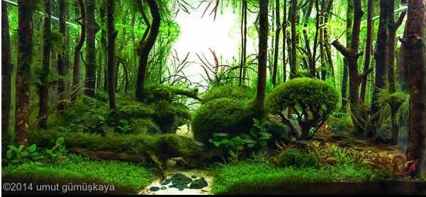 Decoracion Zen Acuario ~ Descubre los incre?bles jardines acu?ticos de Takashi Amano  La voz