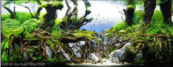 aquascaping de takashi amano el artista de la decoracion de acuarios 7