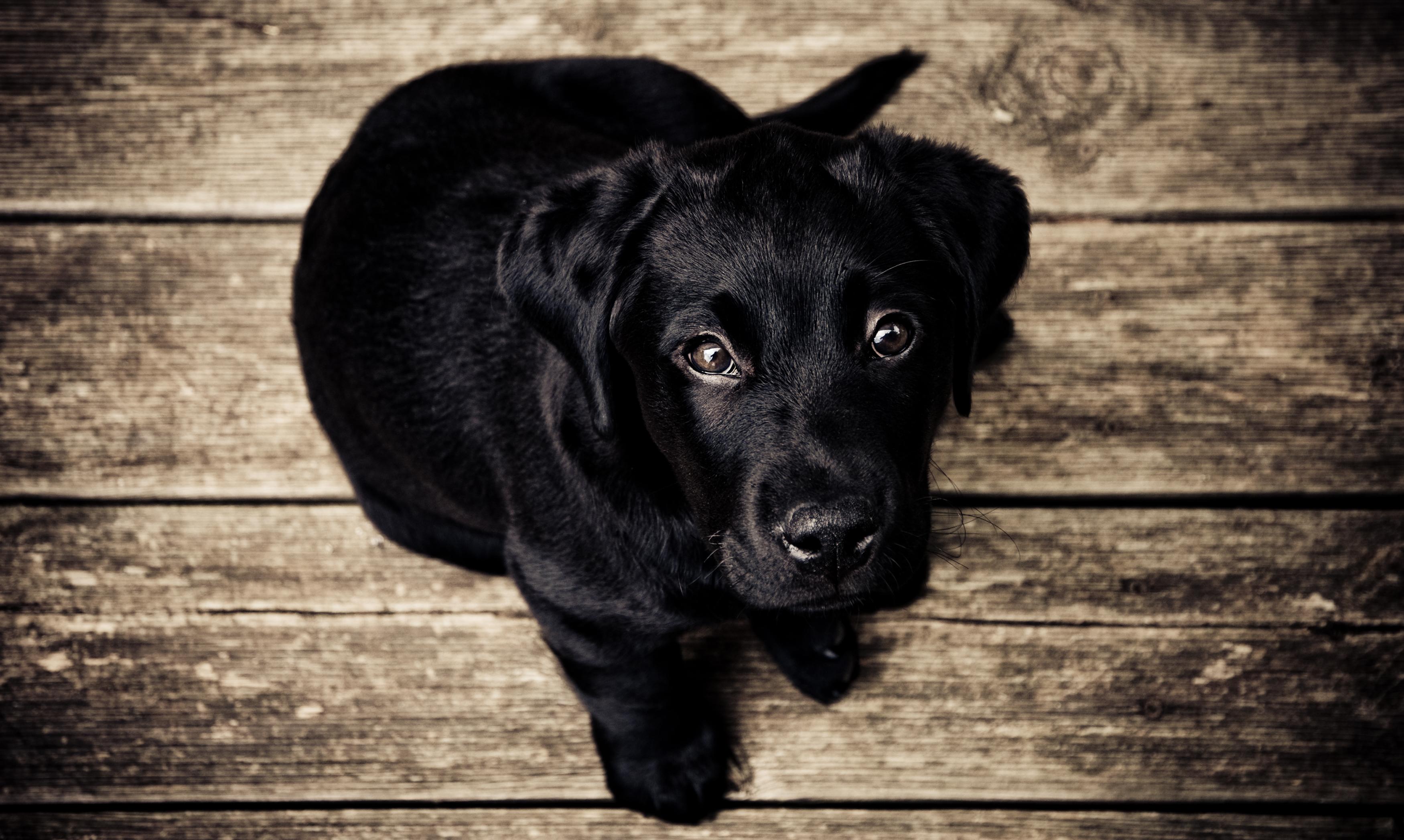 beneficios de tener perro 2