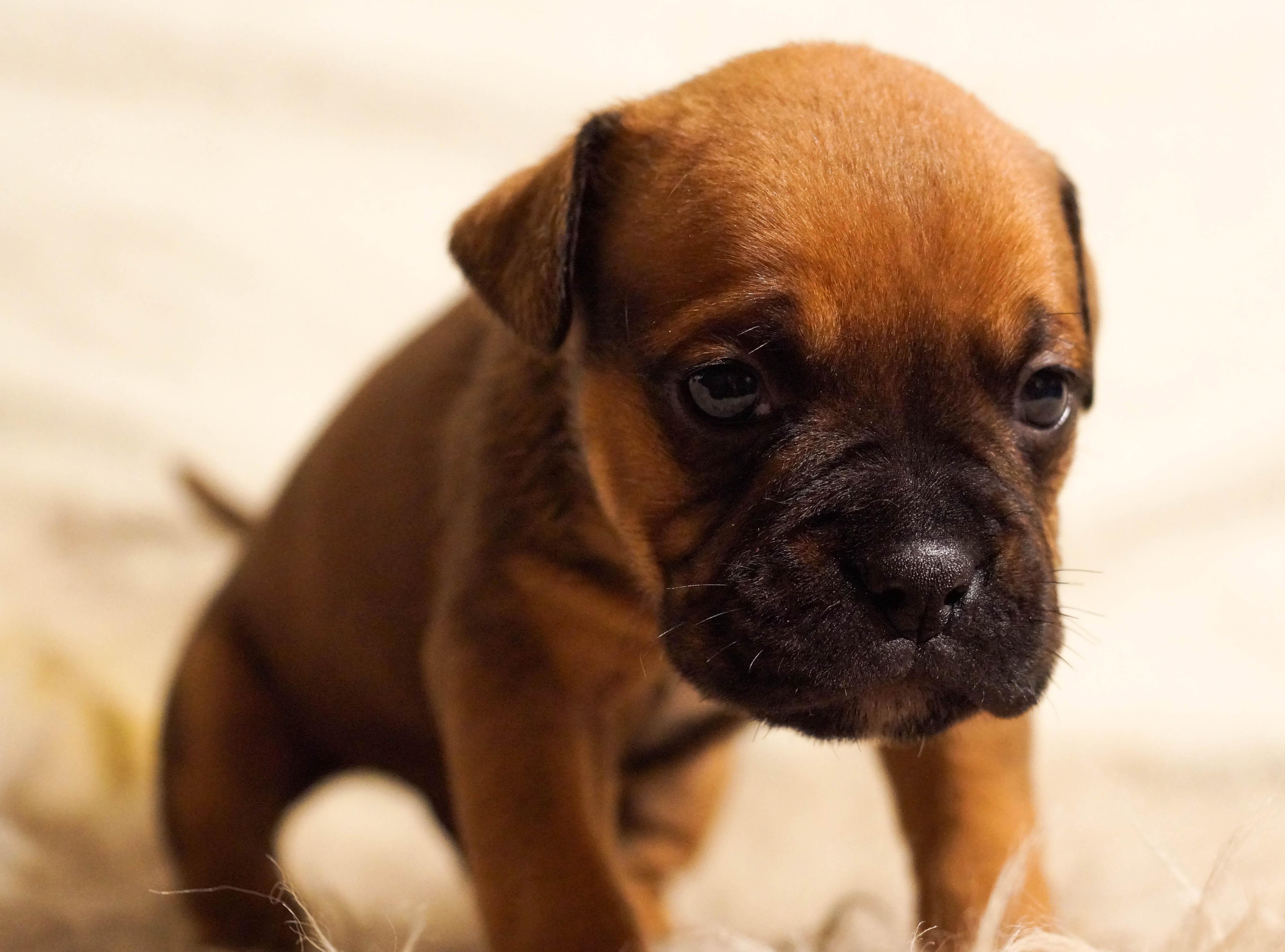 beneficios de tener perro 3