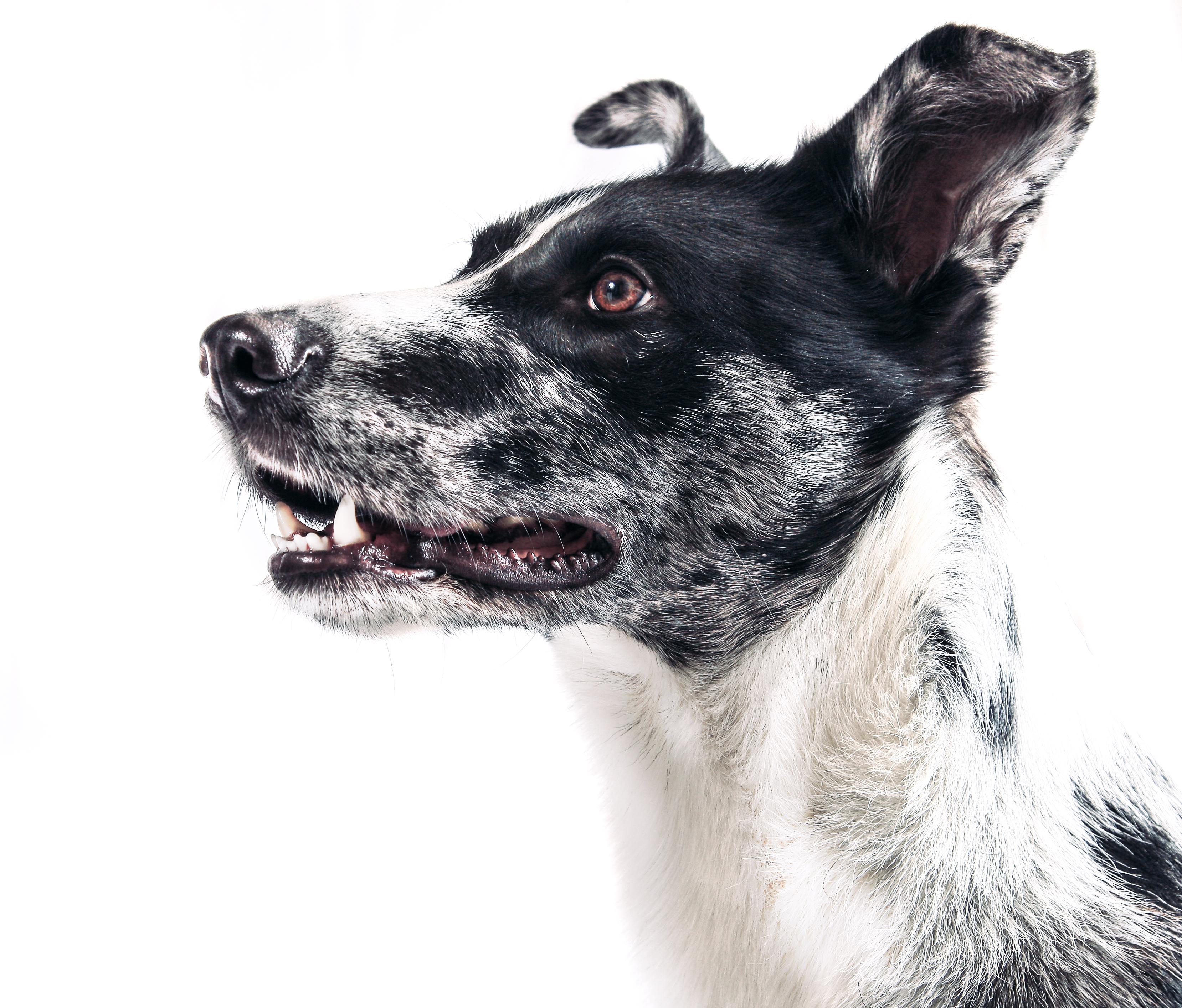 beneficios de tener perro 4