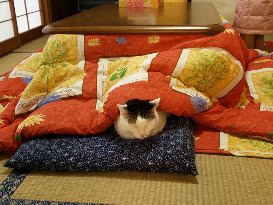 cama calefaccion japonesa 8