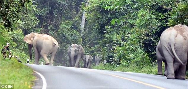 el hombre que pedia perdon a los elefantes por hacer mucho ruido 1