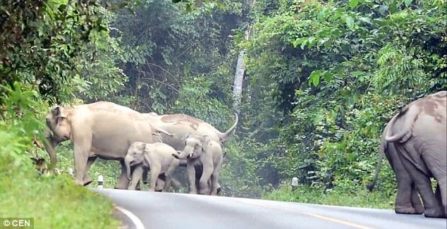 el hombre que pedia perdon a los elefantes por hacer mucho ruido 2